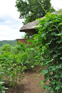Kitchen garden- pic taken May 2012