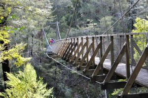 Pelorus Suspension Bridge