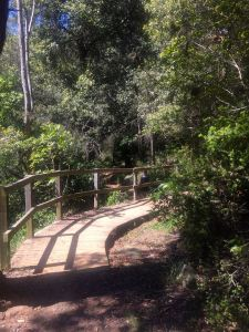She-Oak Track, Lake Parramatta