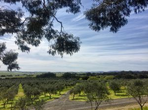 Fedra Olive Groves