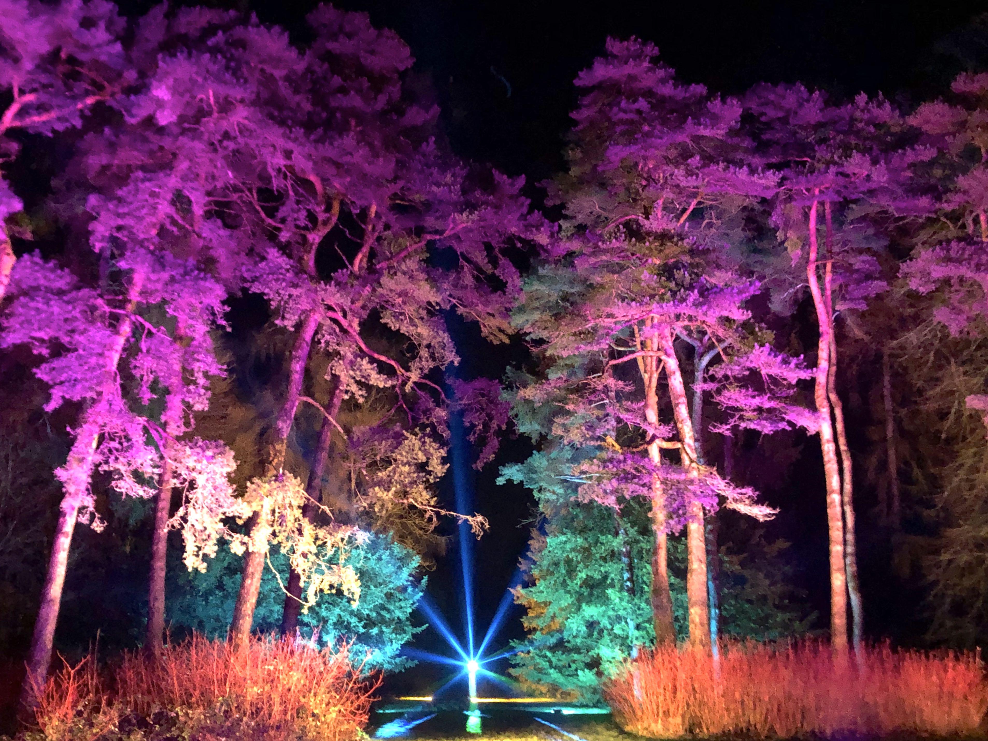 Westonbirt Arboretum: An Enchanted Christmas